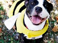 My story Meet Lexie Lexie is an adorable Pit Bull mix,