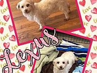 Lexus's story She is fully vetted, spayed,