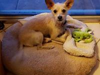 My story Lexus is a young adult spayed female mix. Shes