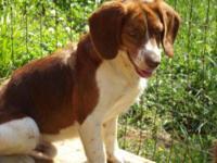 Lhasa Apso - Barney - Small - Adult - Male - Dog Barney