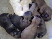 We Have 7 Puppies that will be looking for there new