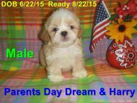 All puppies $450... Call 503-253--0954. or email me at