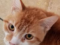 LIAM is a very sweet, affectionate boy. Little freckle