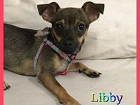 Libby's story Hi friends my name is Libby. Im a 7