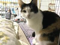 Libby is a very petite, short haired, calico, female