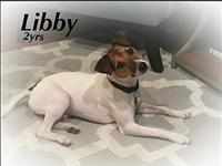 Libby's story Libby is a great people dog but she needs