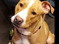 Libby's story Libby is a young active Pitbull Mix, who