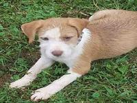 Libby's story Libby is a loving and sweet puppy, just