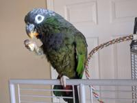 Libby Von is a Maximillian Pionus hatched July 4th,