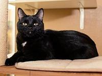 My story Hi I'm Libby. I' m a 6-year-old DSH black