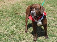 Liberty (#356749) is a gentle 4 year old, 42 pound
