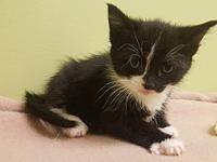 Liberty's story All of our kitties are tested, fully