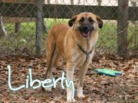 Liberty is a shy young girl rescued from Santa Rosa.