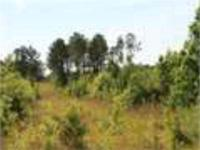 Timber investment plus great hunting! This 41 acre