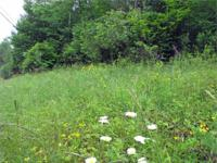 FOR SALE .71 Acre Country Lot!! Liberty, NY - Sullivan