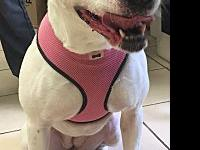 Liberty's story Meet Liberty! She is a 5 year old Boxer