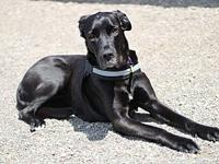 My story Hello. My name is Liberty. I'm a Great Dane