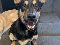 My story Foster location: Boise, ID Breed: German