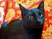 Licorice's story Lanky Licorice is a leggy little