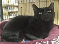 Licorice Declawed-At Cupboard Maker Bookstore's story