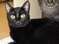 Licorice's story LICORICE is a sweet little domestic