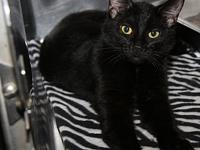 Licorice's story Licorice is a beautiful one-year old