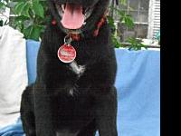 Licorice in TEXAS's story Licorice is currently located