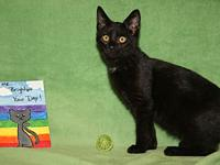 My story Licorice is a handsome male kitten who arrived