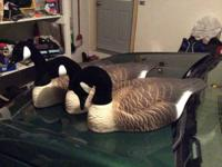 I have two dozen Hidgon Canada goose shells. These are
