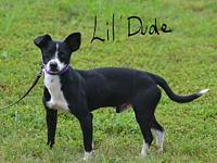 Lil' Dude's story Lil' Dude is sweet and playful and
