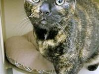 LILA's story Lila is a lovely 4-year-old tortie who is