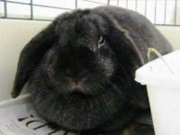 Lilac - Mcelroy A15648885 - Small - Adult - Male -