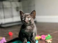 My story Hi, I'm Lilac! I am a fearless, purring,