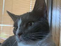 My story Lilac is a sweet cat. She loves being petted,