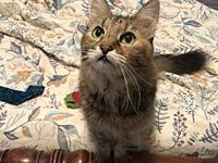 Lillie's story Meet Lillie! This petite lady is an