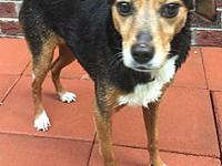 Lilly's story Lilly is a female beagle mix and