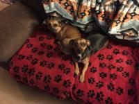 Meet Lilly and Sophia! They were rescued in Colorado by