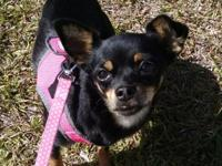 Lilly is a sweet 1 year old Chihuahua mix. She came