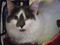 Lilly's story Lilly is a 2 yr old cat looking for her