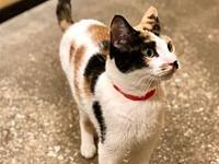 Lilly's story Hi I'm Lilly a pretty 2-year old Calico