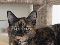 Lilly's story Primary Color: Tortoiseshell Weight: