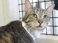 My story I was surrendered to the shelter by my owner