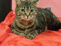 Lilly's story LILLY FEMALE 2YR OLD $50 ADOPTION FEE