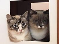 My story Meet Lilly & Luna!We think that they are mom