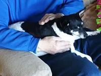 Lilly's story Meet Lilly, 4 year old Rat Terrier,