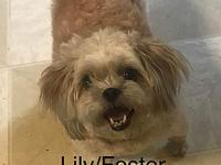 Lilly's story Lilly!! She's the sweetest girl, loves to