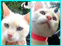 Lilly's story Friendly, likes attention, fully vetted,