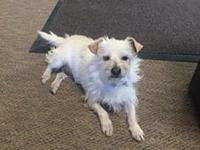 Lilly's story Lilly is a 4-6 year old, female, terrier