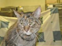 Lilly is a long hair tabby with tortes markings. She is