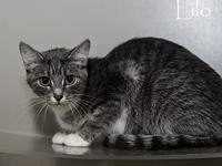 Lilo's story Hi! My name is Lilo. I am a very sweet